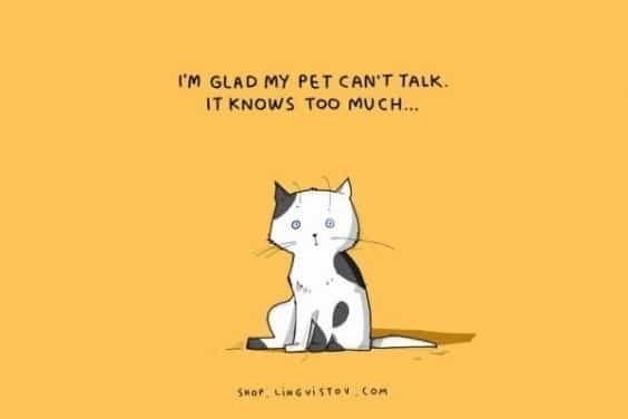 Hilarious Truth about cats that every feline fan will relate to
