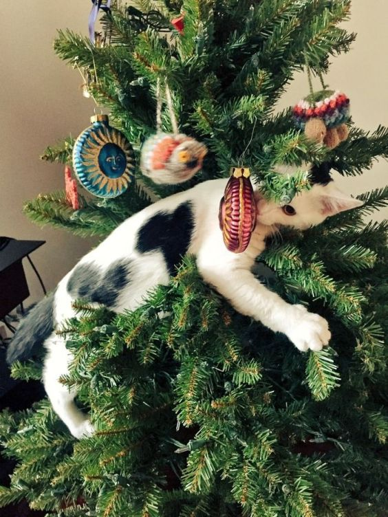 Adorable cats who are excited about christmas trees Christmas tree cat tower
