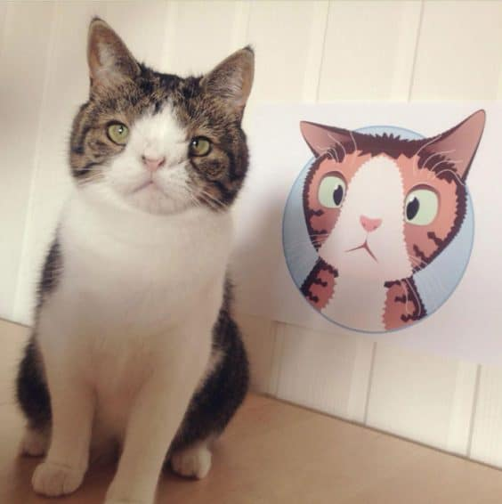 Meet Monty: The Adorable Cat with an Unusual Face