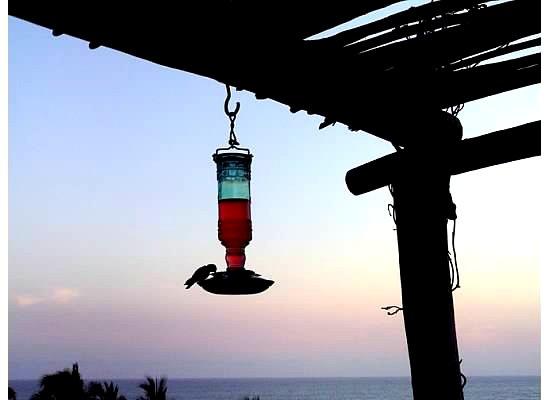 Hummingbird at Todos Santos