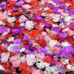 Flower petals in Ubud
