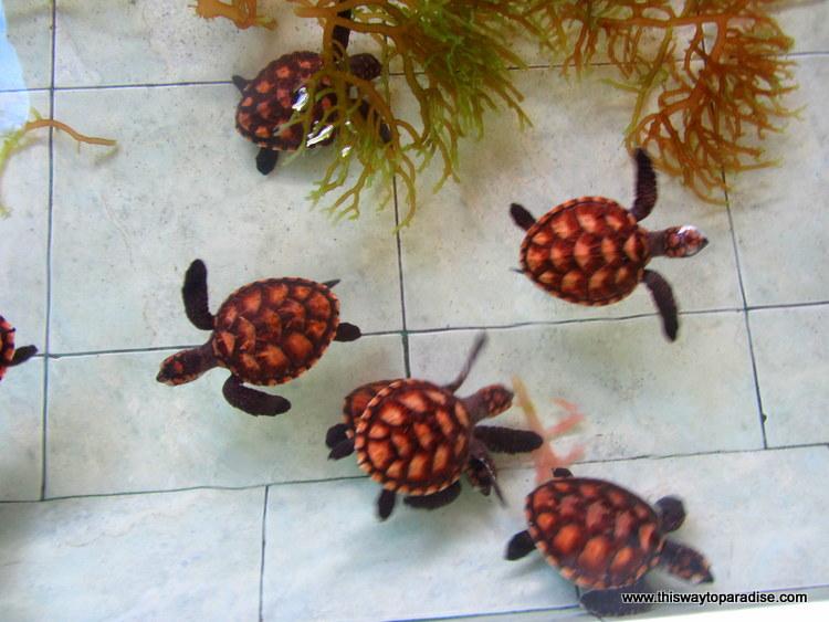 Gili Meno Sea turtle sanctuary