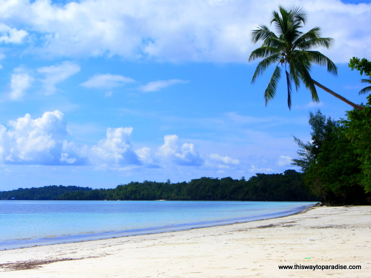 Kei Island Beach with Palm tree
