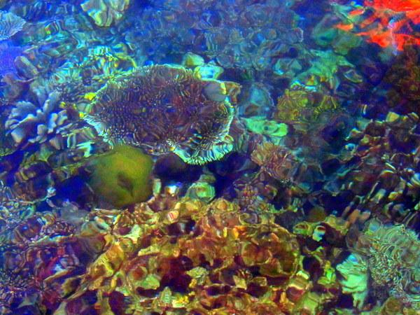 diving in the Raja Ampat islands
