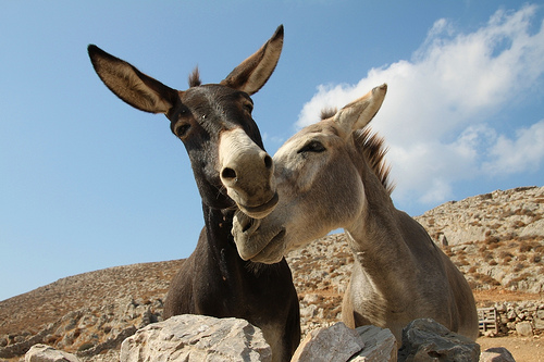donkey in greece