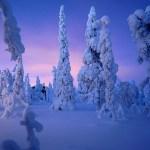 Family Snow Adventures In Arctic Lapland