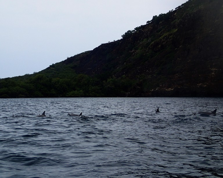 Dolphins In Hawaii: Kealakekua Bay On The Big Island