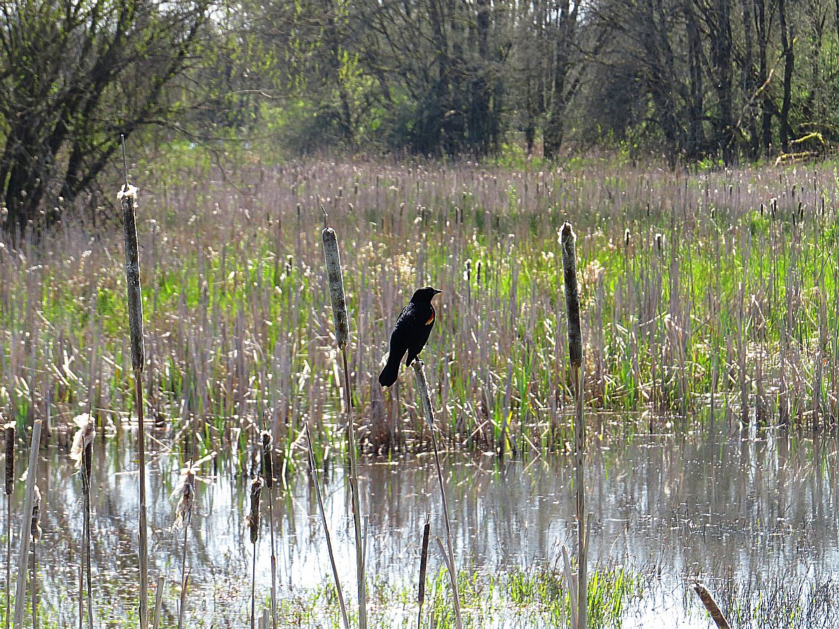 Ridgefield Refuge: The Hike You Can Take Without Even Getting Out of Your Car