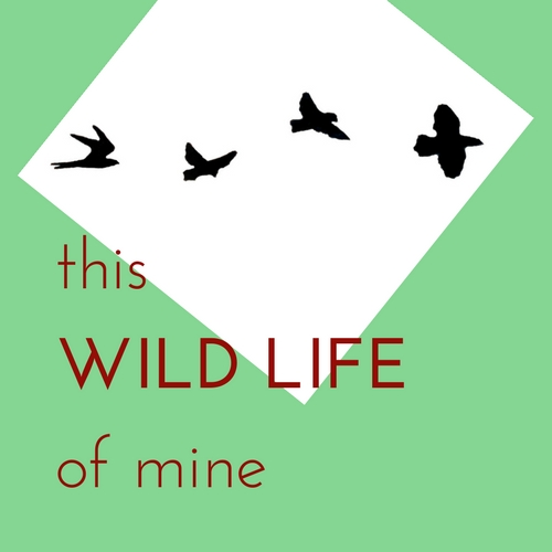 This Wild Life of Mine - on Etsy