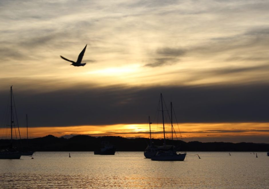 Sunset over the boats in the Bay of Islands, New Zealand