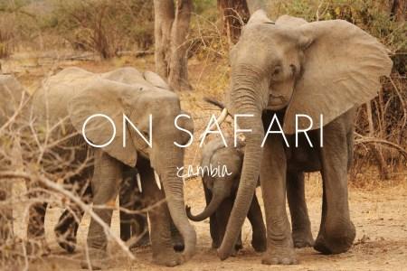 5 reasons to go on safari in Zambia