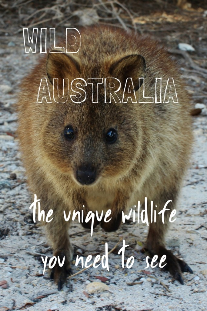 Wild Australia - the unique wildlife you need to see
