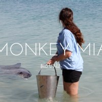 Why You Need to Volunteer with the Dolphins of Monkey Mia