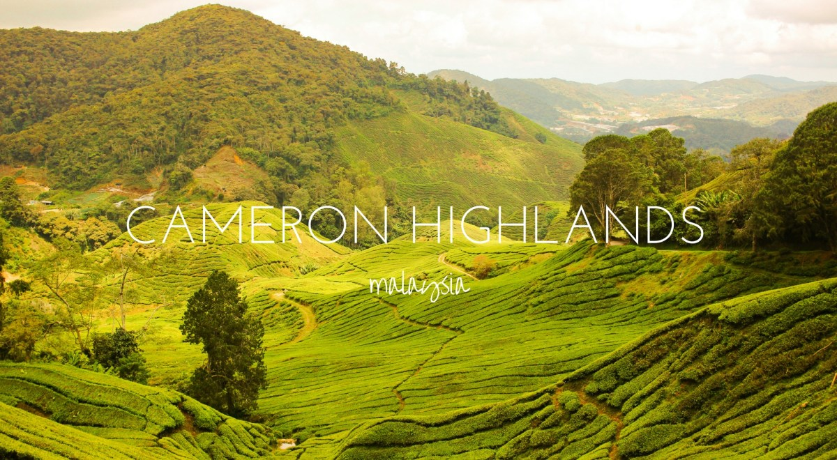 Jungle Hiking in the Cameron Highlands – Malaysia