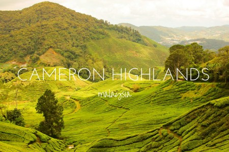 Taking a jungle hike through the Cameron Highlands, Malaysia