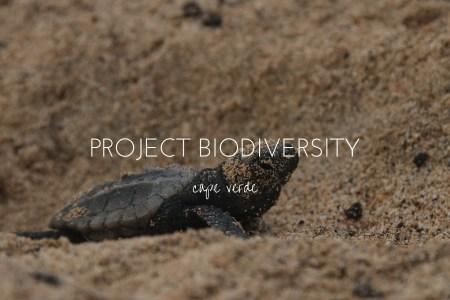 Project Biodiversity, saving Sal's loggerhead turtles one night at a time