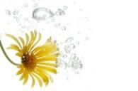 UW-Blume