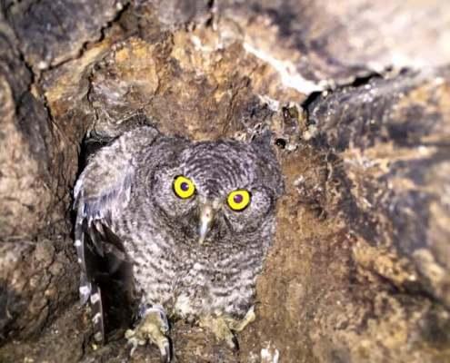 Photo of Owl in Tree