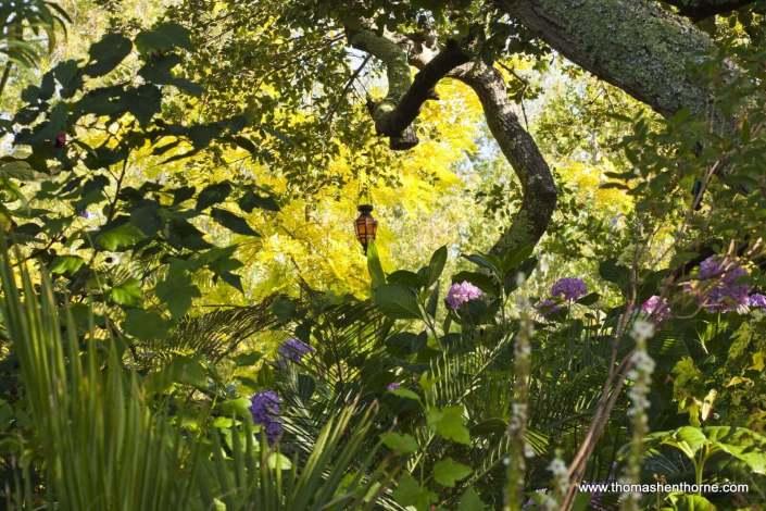 Garden canopy of live oaks and hydrangeas