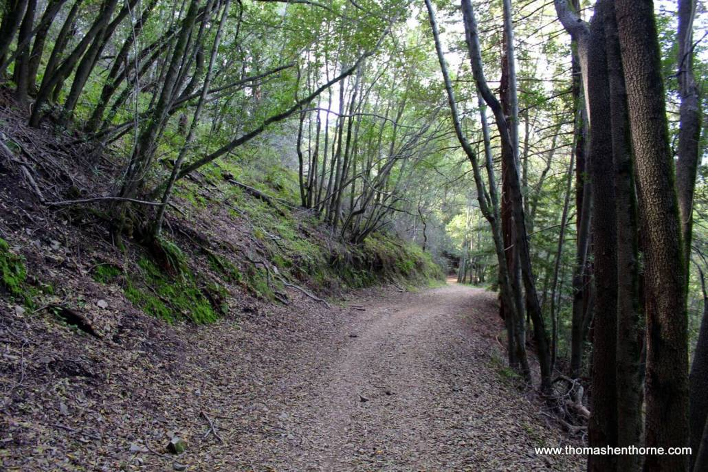 Tree-lined trail in San Rafael California Marin County