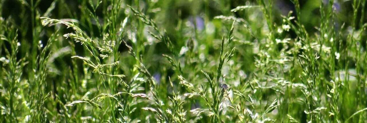 photo of high grass