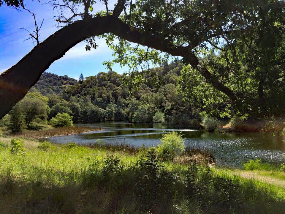 Phoenix Lake Hike with Tree