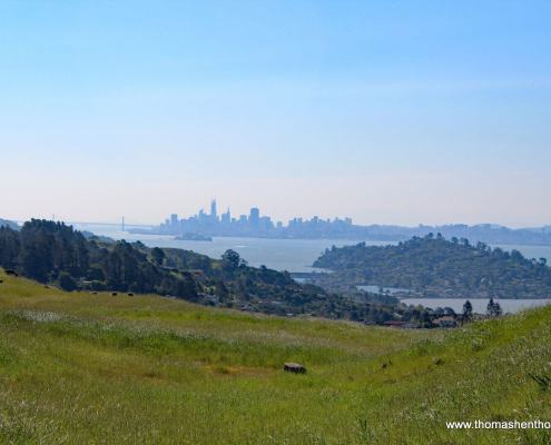 View of the SF skyline from Ring Mountain Hike Trail