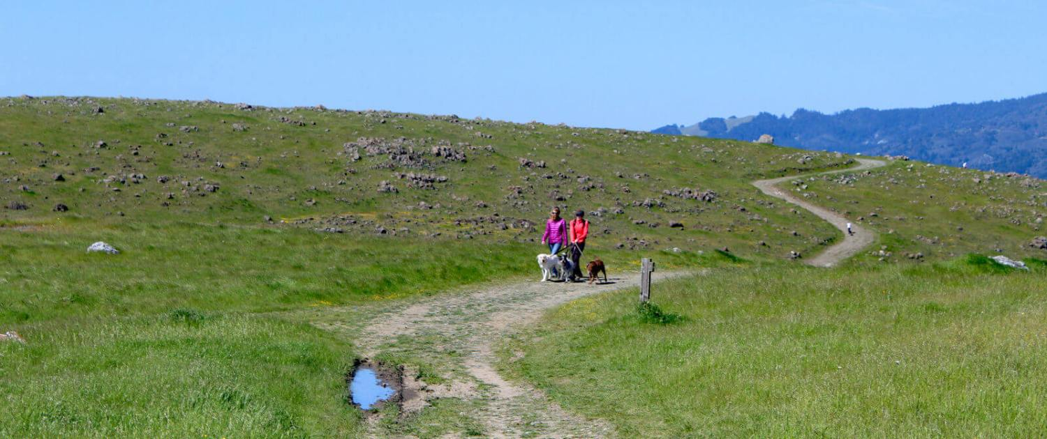 Ring Mountain Fire Road with women walking dogs