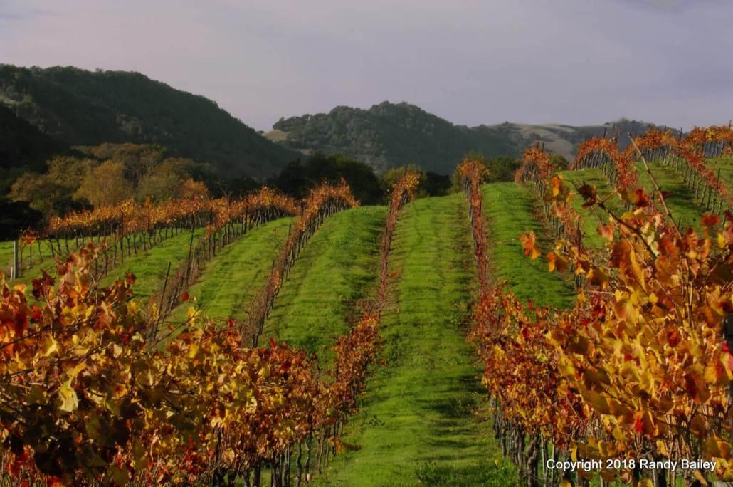 Artesa Winery Late Afternoon