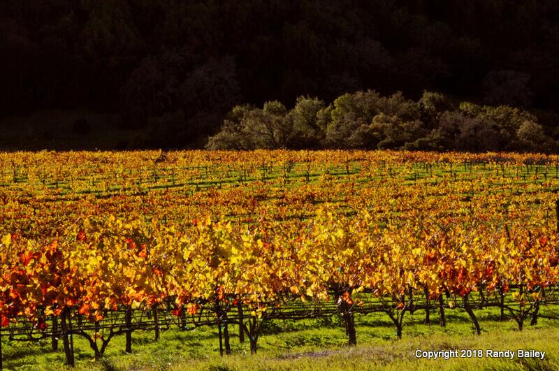 November Light at Artesa Winery