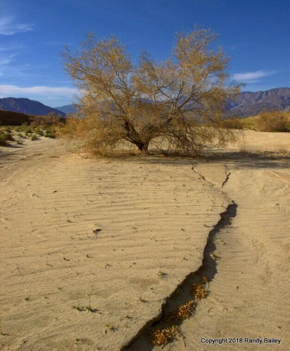 Desert Wash Study