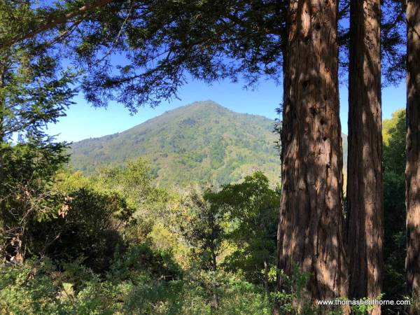 View of Mount Tamalpais from King Mountain Trail Hike