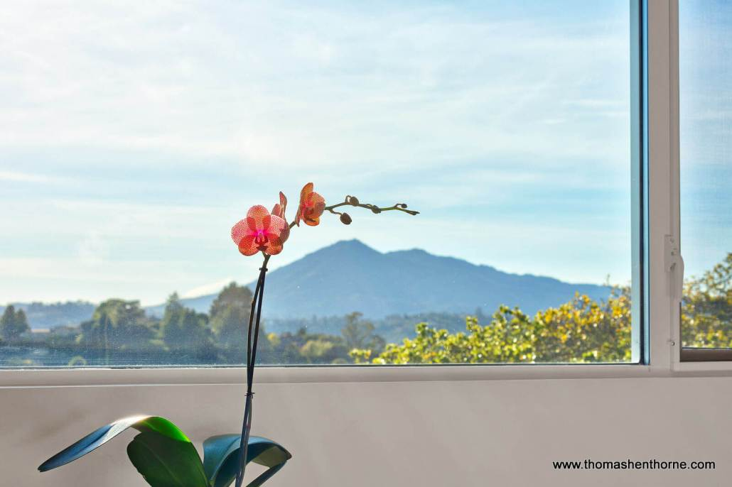 Orchid with Mount Tamalpais View