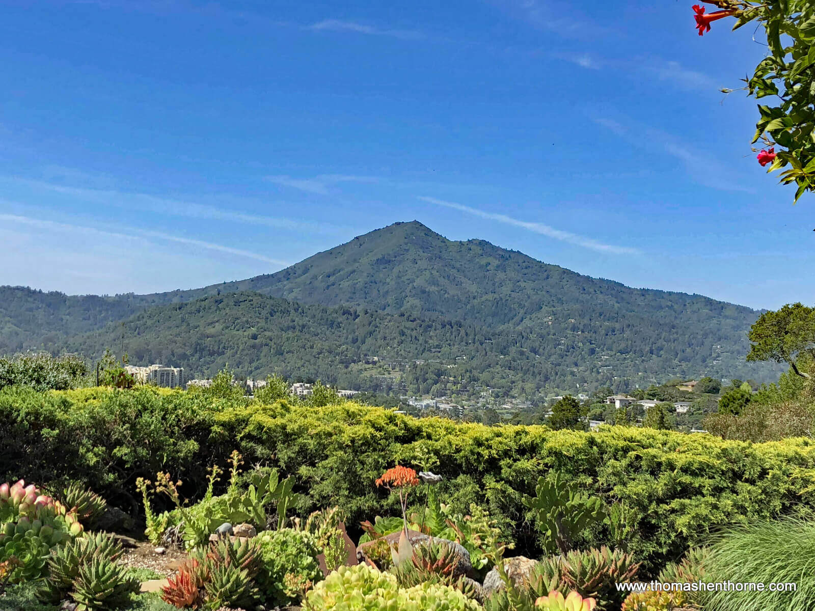 View of Mt. Tamalpais from 145 Bret Harte Road San Rafael