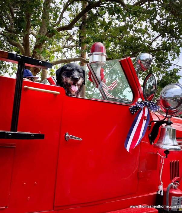 Larkspur 4th of July Parade dog in fire truck