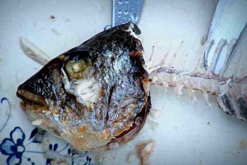 Auch der linke Fisch stinkt vom Kopf © Tom Rübenach