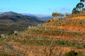 Vignoble de montagne en terrasse comme dans la vallée du Douro (Portugal).