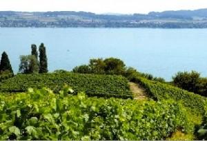Vue du lac de Morat depuis le vignoble du Mont-Vully, AOC supracantonale identique à Fribourg et Vaud.