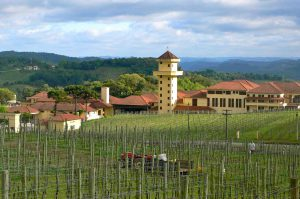 Vins : le paradoxe brésilien