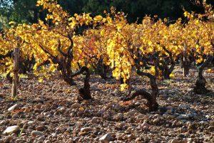 site_cdp_galets roulés_automne