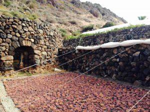 Séchage du zibbibo à l'air libre, contre les murs...