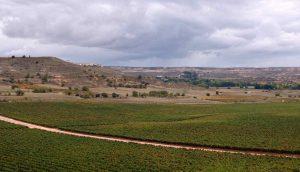 La Ribera del Duero  Une Bourgogne rouge au cœur de l'Espagne