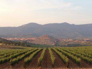 site_rioja13_crespuscule_vignes