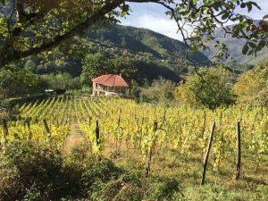 Les vignes d'usakhelouri et la villa-cave de Vakhtamg Aslanikashvili à Okureshi.