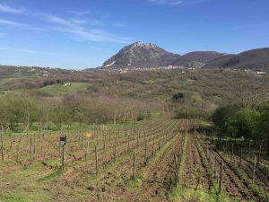 Campanie, une belle découverte et mes vins préférés