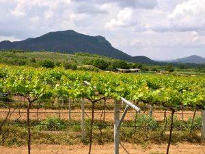 Vignoble de Huan Hills (Thailande)