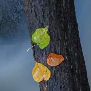 Tankar kring en bild #31 – Tre färger
