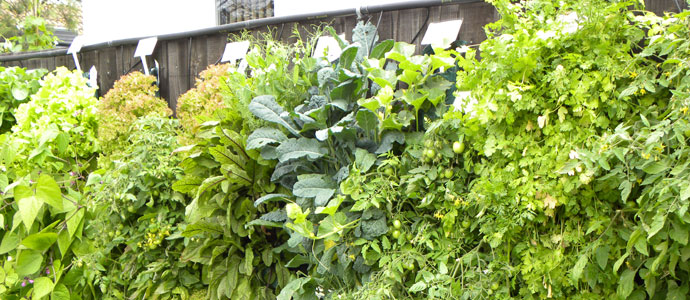 Image Result For How To Grow Vegetables In Pots And Containers