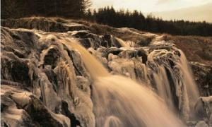 Loup at Fintry