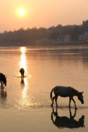 Horses relaxing at the Ganga in Rishikesh, India - where I went on a yoga retreat in 2013.